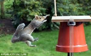 the tip to keep squirrels away from the garden