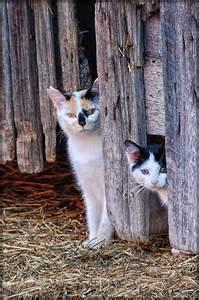 barn cat barn cats warm and fuzzy