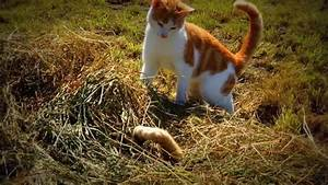 Warrior Cats Movie Trailer Hunger Games 2017 - YouTube