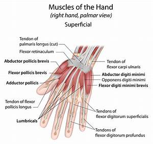 Wrist Injuries: Science Of Intersection Syndrome | El Paso ...