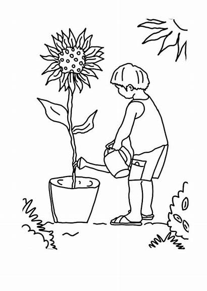 Coloring Plants Growing Sunflower Kid Pages Plant