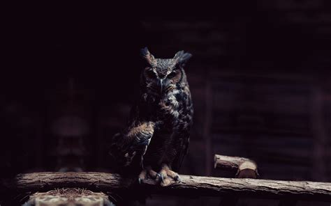 Black Owl Wallpapers by Owl Wallpapers Wallpaper Cave