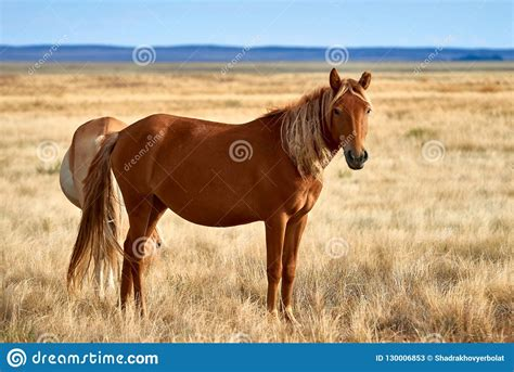 horses asia wild central steppe grazing milk