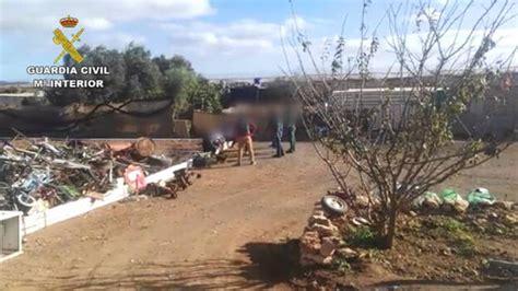 Desmantelan dos plantaciones de marihuana en Fuerteventura ...