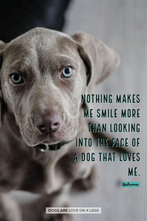 smile   dog dog quotes