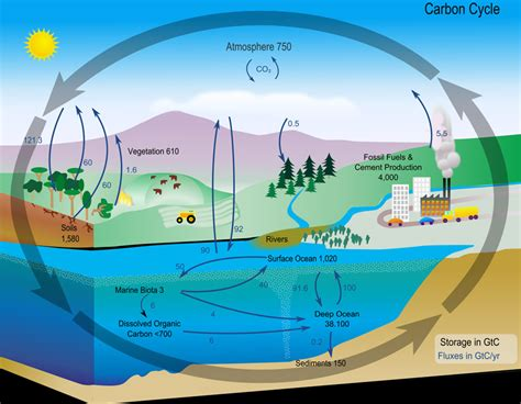 define missing carbon sink carbon cycle diagram from nasa ucar center for science