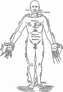 Front View Of The Parts Of The Human Body Labeled In