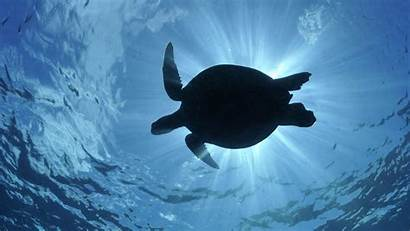 Turtle Background Wallpapers Animal Wall