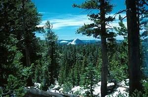 Life In The Taiga : 10 interesting coniferous forest facts my interesting facts ~ Frokenaadalensverden.com Haus und Dekorationen