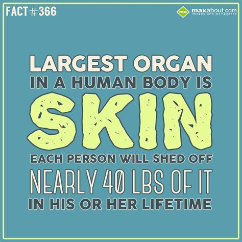Largest organ in a human