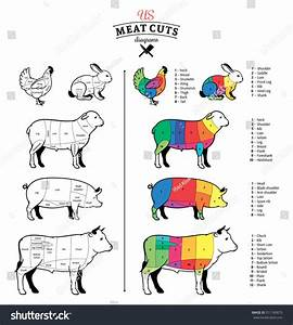 American  Us  Cuts Of Beef  Pork  Lamb  Rabbit And Chicken