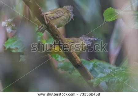 different types of birds that sing different types of birds stock images royalty free images vectors