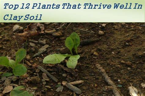 top  plants  grow   clay soil