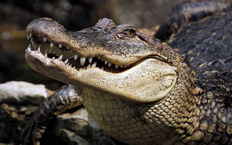 crocodiles oldest living animals reptiles dinoanimals crocodile