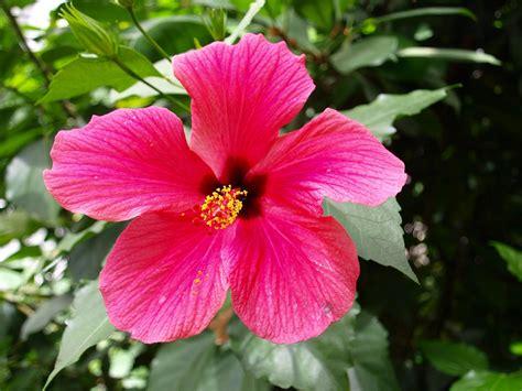 Pflanzen Für Die Küche by Feiertage Und Veranstaltungen L 228 Nder Costa Rica Goruma