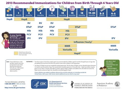 postnatal vaccination embryology 381 | 600px USA recommended immunizations for children 2013