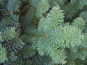 noble fir bough tree house