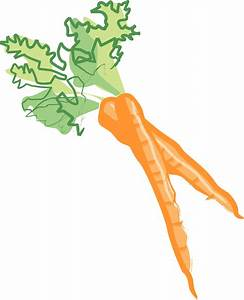 Carrot clipart bunch carrot - Pencil and in color carrot ...