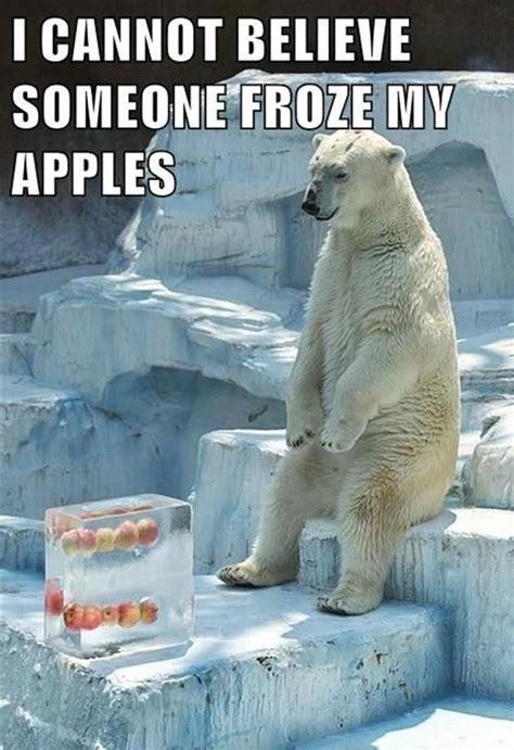 Funny Bear Memes - 25 funny animal memes to make you laugh till you drop