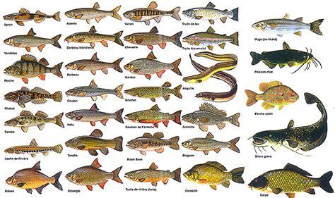 choisir esp 232 ce de poisson pour l aquaponie aquaponie