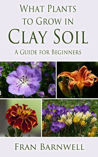 17 best images about clay soil plants on