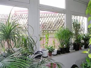 Pflanzen Wohnzimmer Feng Shui : wintergarten selber bauen ratgeber anleitung ~ Bigdaddyawards.com Haus und Dekorationen