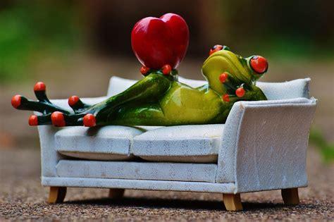 canapé blanc et noir photo gratuite grenouille l 39 amour canapé coeur image