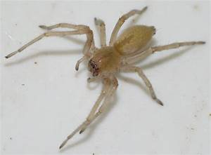 Spider Bites Guide – Know Your Spiders!