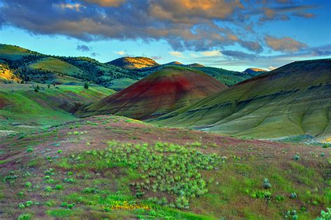 hills painted oregon natural elements ireena worthy marchetti andrea freiraum wildflowers spring
