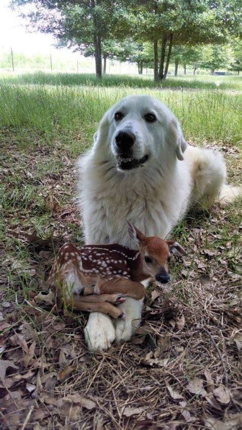 rescue fawns    act    puppies