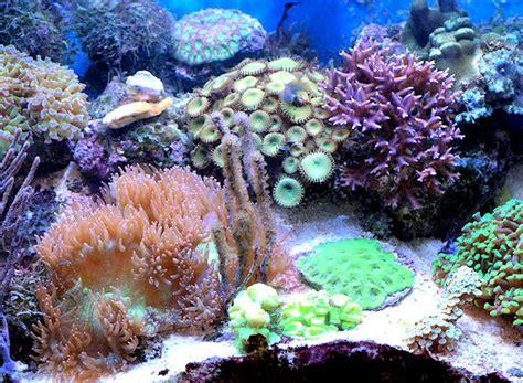 le nano aquarium mur v 233 g 233 tal et aquariums sur mesure