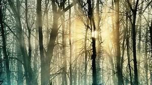 Schütze den Wald  Natur  Arten  RESETorg