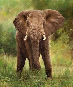 African Elephant Painting by David Stribbling