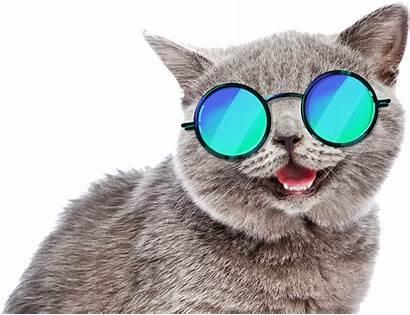 Sunglasses Funny Fun Cat Meme Picsart
