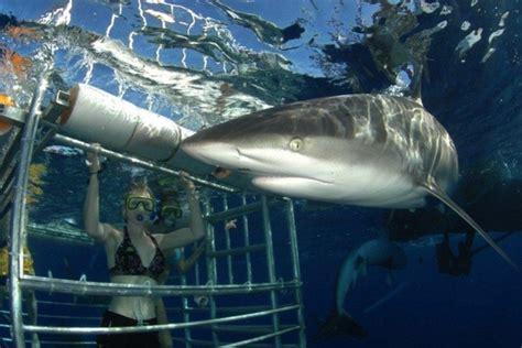 hawaii shark encounters honolulu attractions review