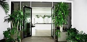 Plante Verte D Appartement : zoom sur les plantes d 39 int rieur grazia ~ Premium-room.com Idées de Décoration