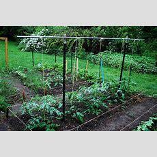 Build A Tomato Trellis For Staking Tomatoes