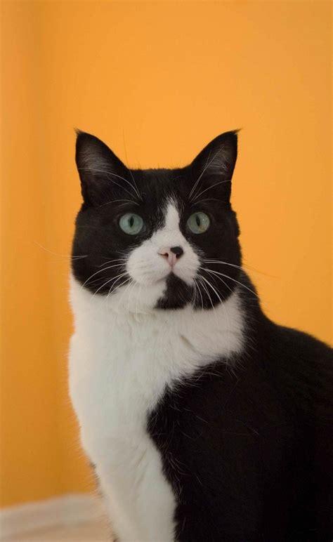 kostenlose foto weiss schwarze katze schwarz sitzen
