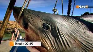 Autopsie XXL Der Weiße Hai Trailer N24 HD YouTube