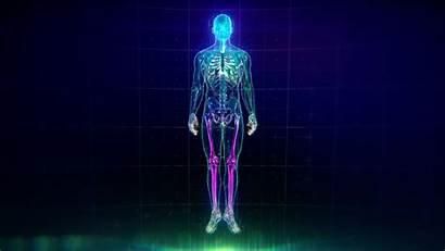 Human Skin Animation Showing Organs Veins Bones