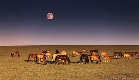 Erdenebulgan Mongolia (Erdenebulgan) Photos / 500px