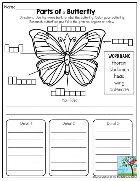 parts of a butterfly great science activity found in the
