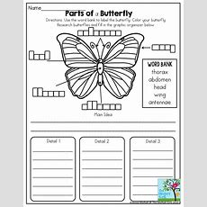 Best 20+ Second Grade Science Ideas On Pinterest  Grade 2 Science, Elementary Science And 2nd