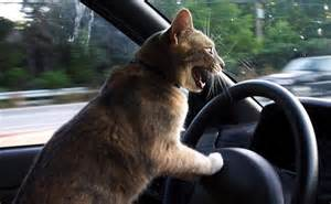 Cats Driving Cars