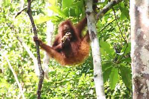 Tropical+Rainforest+Animals+and+Plants | pic tropical ...