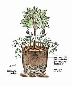 Anatomy Of A Container Garden