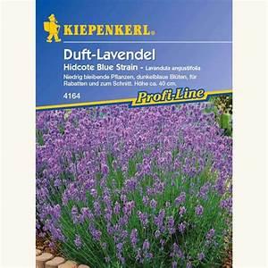 Lavendel Pflanzen Balkon : samen saatgut lavendel 39 hidcote blue strain 39 ~ Lizthompson.info Haus und Dekorationen