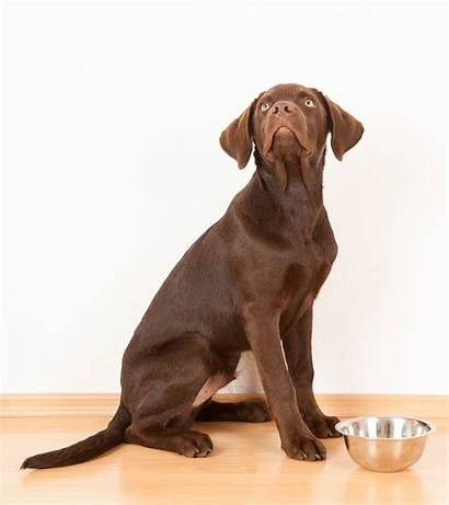 Breed Puppy Dog Breeds Giant Adult Weight