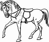 Horse Coloring Drawing Colour Clip Outline Line Wallpapers sketch template