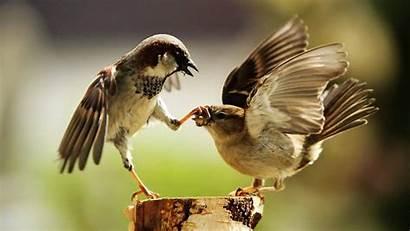 Bird 1080p Screen Wallpapers Wide Birds Animals